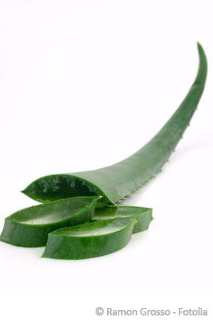 Aloe Vera Gel hilft gegen Narbenbildung