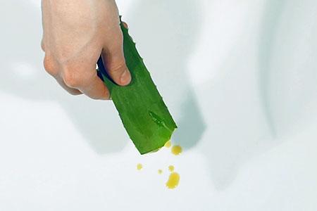 Aloe Vera Blatt, aus dem der Aloe Vera Inhaltsstoff Aloin tropft